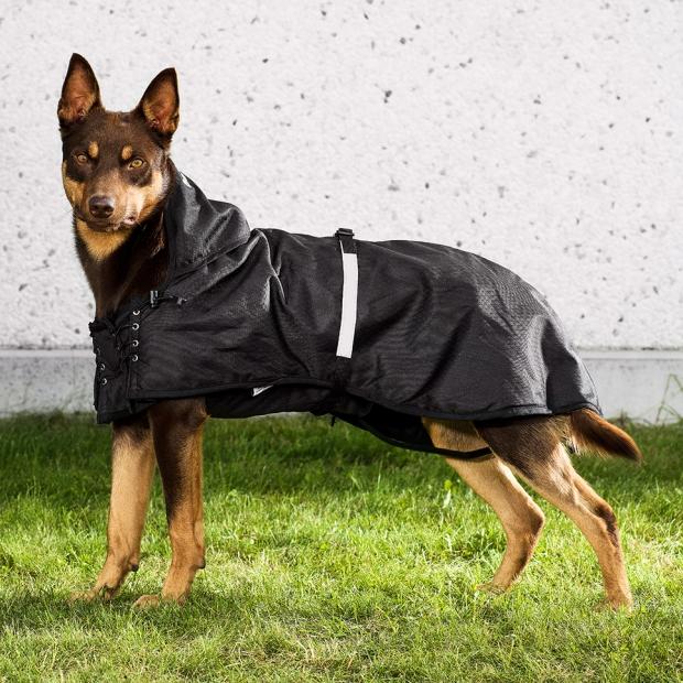 Back on Track Hunde-Regendecke 78-82 cm