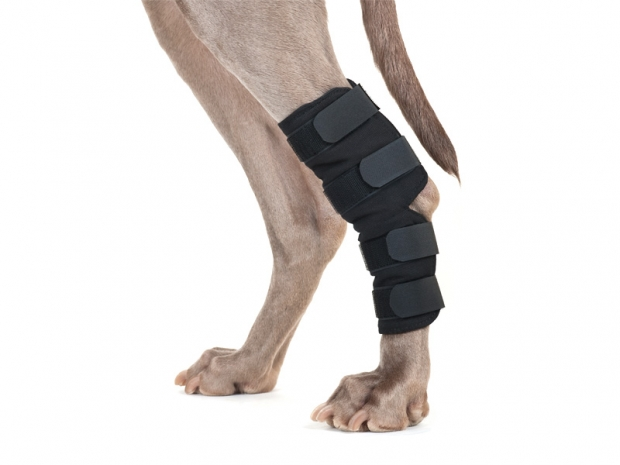Back on Track Sprunggelenkschoner für Hunde