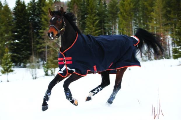 Horseware Amigo Bravo 12 Original medium dark navy with red