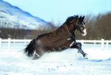 Horseware Rambo WUG heavy mit Vari-layer braun