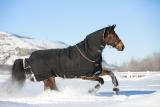 Horseware Rambo Supreme heavy Weidedecke schwarz/ orange
