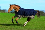 Horseware Amigo Mio Turnout medium navy tan Weidedecke Winterdecke
