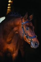 Horseware Rambo Micklem Multibridle black