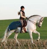 Horseware Amigo 3 in 1 Competition Sheet navy