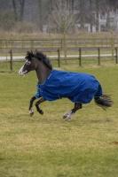 BUCAS Smartex Rain Blau Pony 85-120 + Gratis Magic Brush