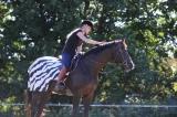 BUCAS Riding Rug Zebra Reitdecke S-XL