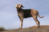 Back on Track Hunderückenschoner für Hunde Größe S Kreuzschoner