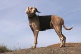 Back on Track Kreuzschoner für Hunde, Größe M