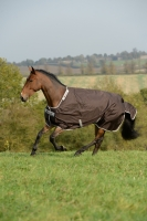 BUCAS Smartex Rain chocolate Pony 115-120